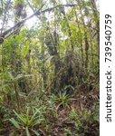 many terrestrial bromeliads... | Shutterstock . vector #739540759