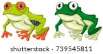 two green frogs on white... | Shutterstock .eps vector #739545811