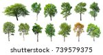 collection of isolated trees on ... | Shutterstock . vector #739579375