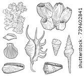 Vector Seashells  Corals And...