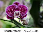 image of beautiful purple... | Shutterstock . vector #739613881