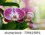 image of beautiful purple... | Shutterstock . vector #739615891