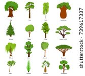 Different Green Tree Types And...
