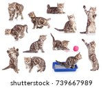 cats isolated set | Shutterstock . vector #739667989