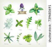 watercolor collection of... | Shutterstock . vector #739683691