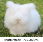 Stock photo rabbit 739689391