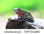 dumpy frog and snails   Shutterstock . vector #739731085