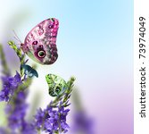 Stock photo wild flowers blue blooming with butterfly 73974049