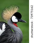 Beautiful Crowned Crane With...