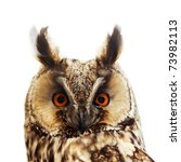 Stock photo long eared owl portrait isolated on white 73982113