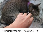 cat's scratch on human hand and ... | Shutterstock . vector #739823215