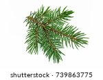 fir branch on white | Shutterstock . vector #739863775