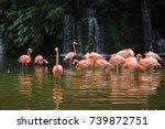 Pink Long Legs Flamingo Birds...