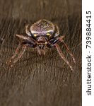 Small photo of Close up of a small tropical spider with red and yellow stripes and the classic arachnid shape perfect for halloween.