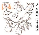 pears vector illustration plant ... | Shutterstock .eps vector #739895104