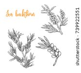 sea buckthorn set | Shutterstock .eps vector #739922551
