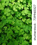 Beautiful Clover Background