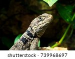 green small lizard gecko close... | Shutterstock . vector #739968697