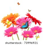 Gerber Flowers With Butterflies ...