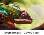 Close Up Animal Portrait Photo...