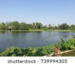 canal with abundance | Shutterstock . vector #739994305