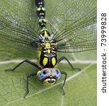 Dragonfly Sitting On The Leaf