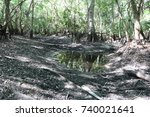 dry swamp   Shutterstock . vector #740021641