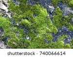 green mos background stone with ... | Shutterstock . vector #740066614