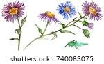 wildflower chrysantemum flower...   Shutterstock . vector #740083075