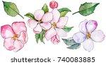 wildflower flowers of apple... | Shutterstock . vector #740083885