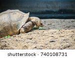 giant african spurred tortoise  ... | Shutterstock . vector #740108731