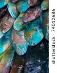 beautiful colorful fish on the... | Shutterstock . vector #74012686