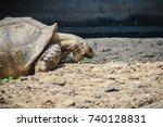 giant african spurred tortoise  ... | Shutterstock . vector #740128831