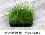 bright green fresh grass...   Shutterstock . vector #740145361