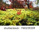 autumn foliage kyoto            ...   Shutterstock . vector #740159209