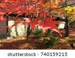 autumn foliage kyoto       Shutterstock . vector #740159215