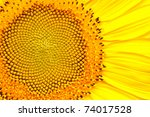 sunflower | Shutterstock . vector #74017528