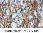 background of the buds of... | Shutterstock . vector #740177185