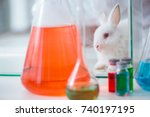 white rabbit in scientific lab... | Shutterstock . vector #740197195