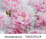 summer flowers  beautiful big... | Shutterstock . vector #740219119