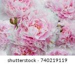 summer flowers  beautiful big... | Shutterstock . vector #740219119