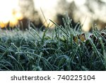 Autumn Frost On Grass In...