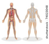 Illustration Of Human Anatomy...