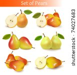 big set of fresh pears. vector. | Shutterstock .eps vector #74027683