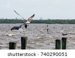 Small photo of Two gulls having an altercation in mid air as their beaks meet