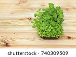 potted seedlings growing in... | Shutterstock . vector #740309509