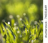 green grass with dew on it with ... | Shutterstock . vector #74031649