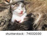 Stock photo newborn domestic kittens isolated 74032030