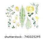 botanical set of eucalyptus... | Shutterstock . vector #740325295
