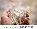 shredded documents  hand... | Shutterstock . vector #740359651